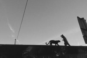 """VIDEOPREMIÄR: Cats & Dinosaurs – """"Jobba mindre!"""""""