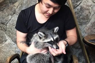 PL_raccoon